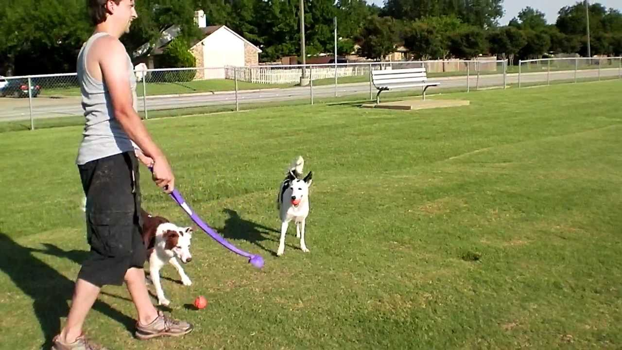 Ultimate Wireless Dog Fence Reviews In Ground And Wireless Dog Fence